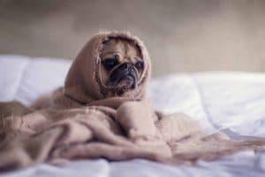 Rest easy boiler service dog